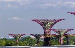 du hoc singapore